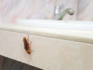 pest control, extermination, rodent removal, bed bugs, termite removal, Lafayette, LA